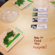 Frog Lettuce