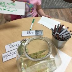 Frog vocab writing